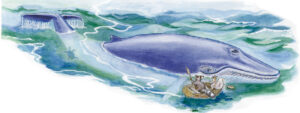 Racoon in the Sea