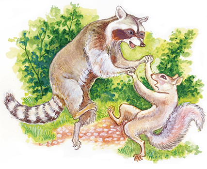 Racoon And Squirrel